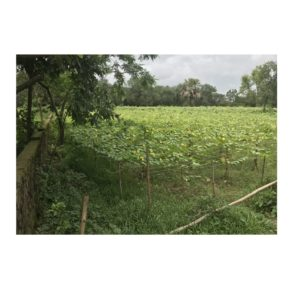 Land Size-30-Katha